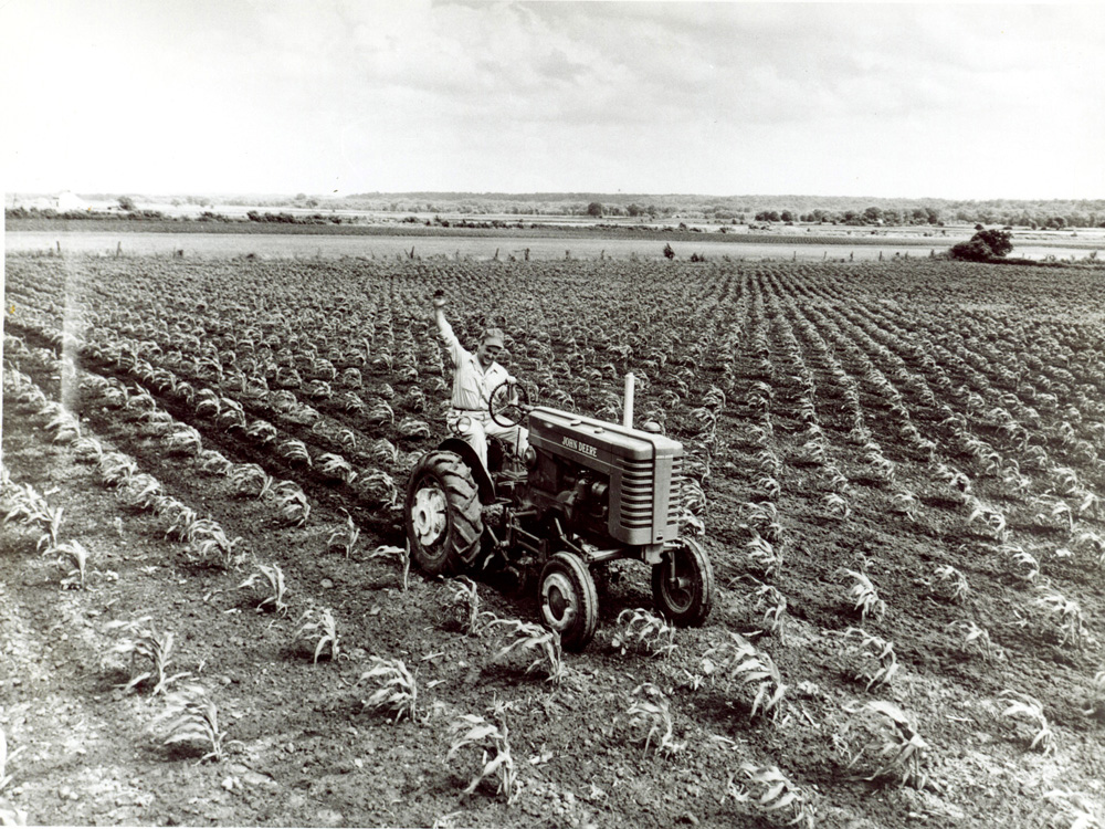 Adult man sitting on a cab-less tractor waving to the photographer.  Cultivator attachment is working up the soil around the young field corn plants.