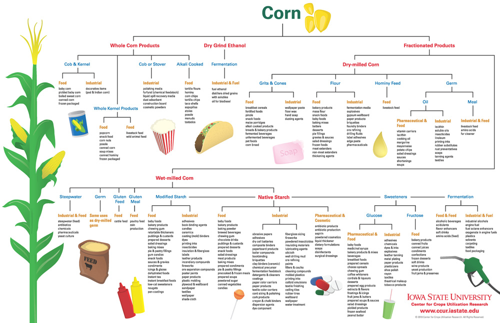 Flow-chart showing the many uses of corn, divided into three main sub-categories: whole corn products, dry grind ethanol, and fractionated products.