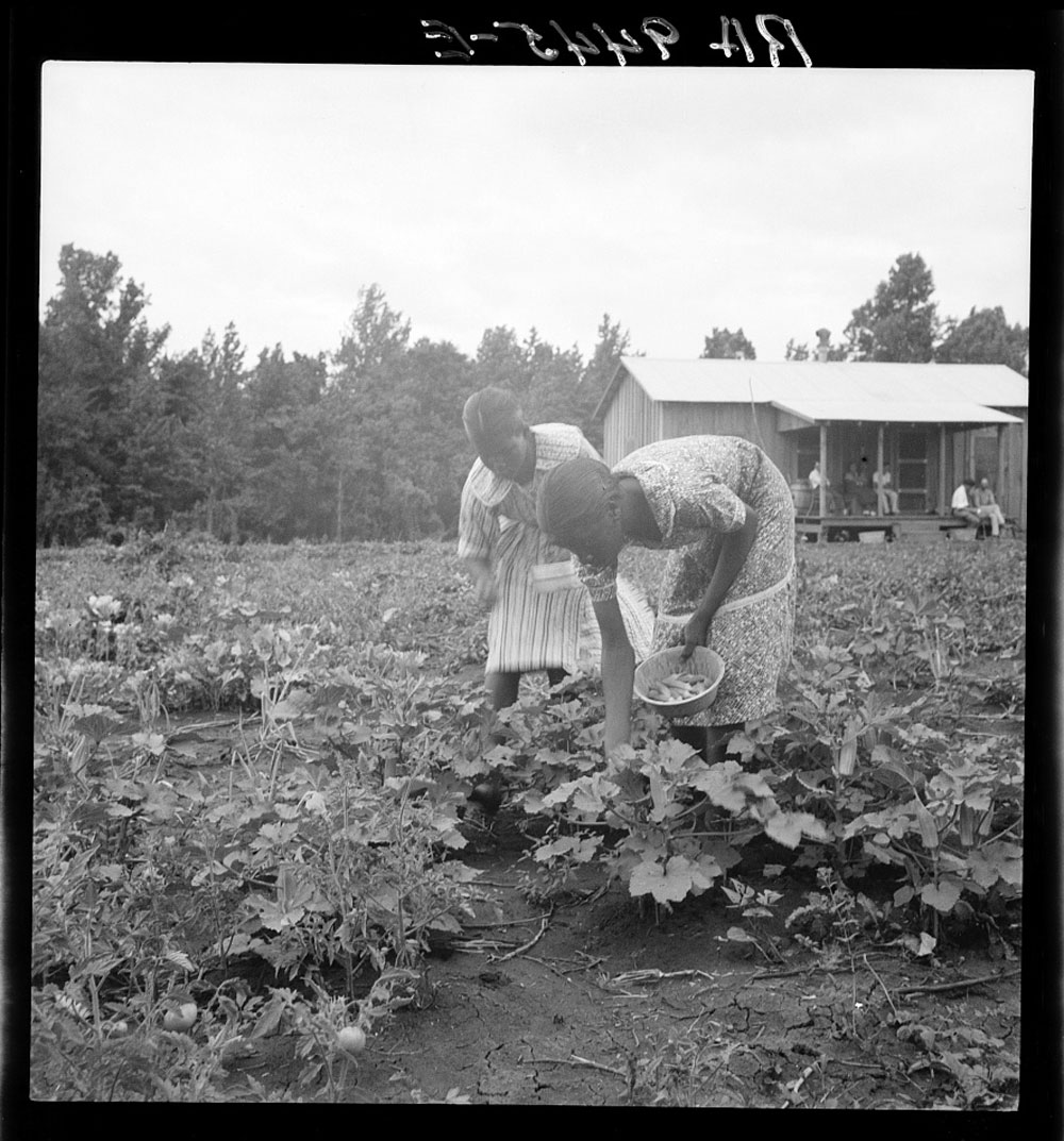 Family of Evicted Sharecroppers Resettled in Mississippi, July 1936