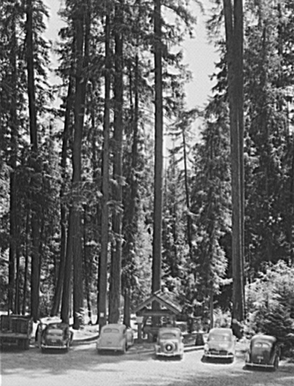 Rogue River National Forest in Jackson County, Oregon, July 1942