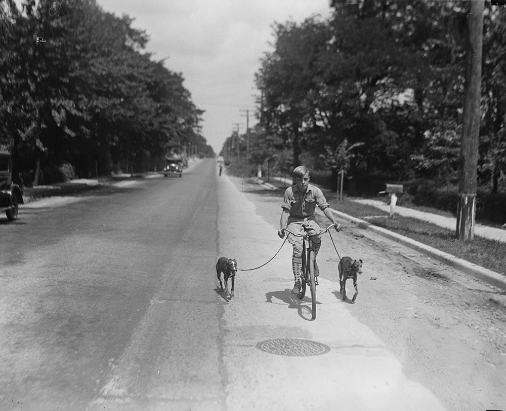 Boy Riding Bicycle with Dogs on Leashes, 1928