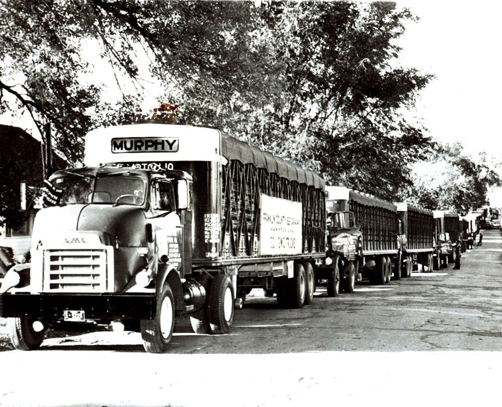 Convoy of more than six identical trucks lined up on the road, all loaded with cattle.  No cattle are visible, though.