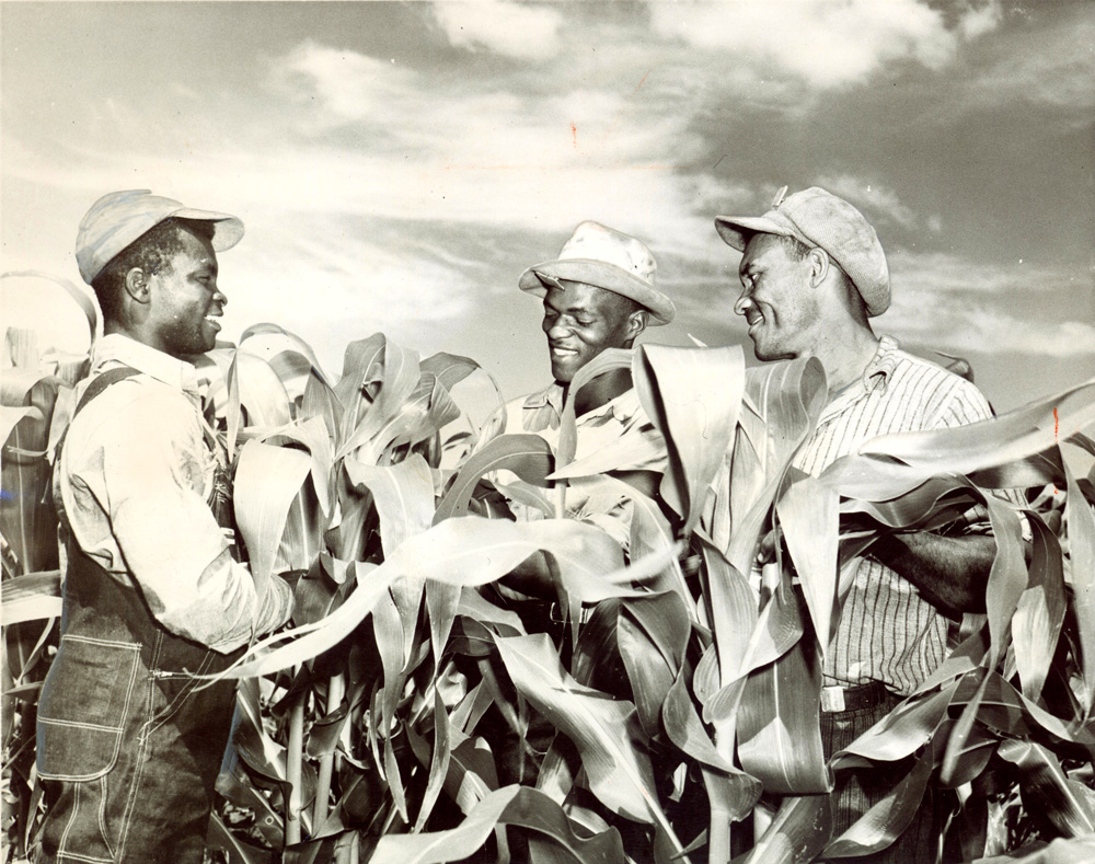 Three adult men pictured in a field of tall corn.