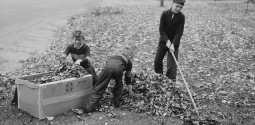 Boy Raking Leaves on a Front Lawn in Bradford, Vermont
