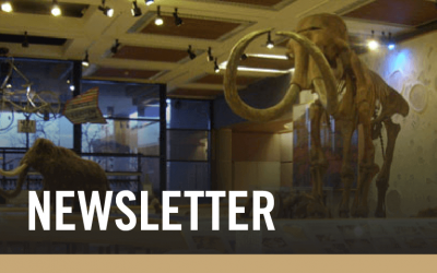 Subscribe to our Newsletter with mammoth in the background of the text