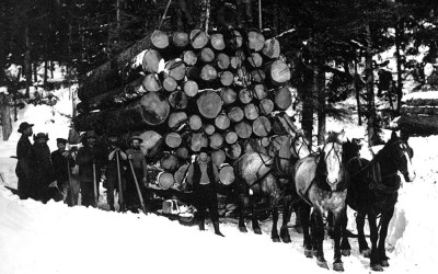 A team of horses hauls logs on a sleigh in the snow.