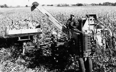 One adult male farmer sits on a John Deere tractor.  Attached behind the tractor is a two-row corn picker on the farmer's left, and an auger leading to a wagon full of ears of corn that is on the farmer's right.  The corn in the field is fully mature and ready to be harvested.