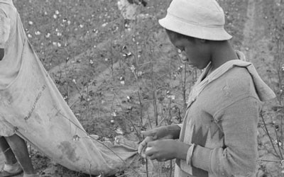 Young African American Picking Cotton, October 1935