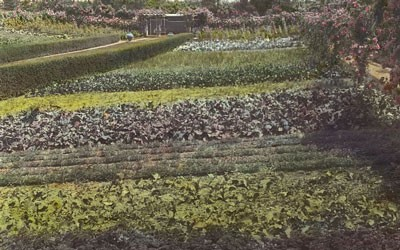 "Vegetable Garden At ""Beacon Hill House"" in Newport, Rhode Island, July 1917"