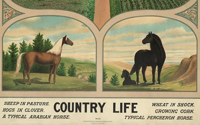 "The bottom third of the image shows a ""typical Arabian horse"" and a ""typical Percheron horse."" The top of the image shows a scene with pastures on the left and grain fields on the right. One pasture has hogs, and the other sheep. The grain fields show a wheat field after harvest and a corn field growing."