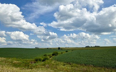 Image shows a soybean field in Benton County near Newhall Iowa.  The image shows soybeans for as far as one can see.
