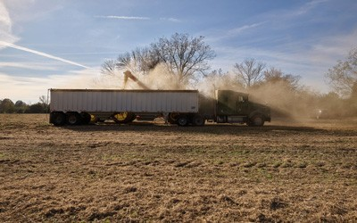 Truck and covered grain trailer parked in a field.  Auger delivers crops and a lot of dust into the trailer.