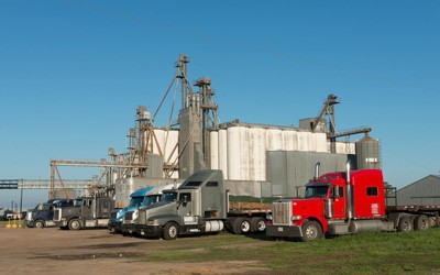 Five trucks parked near a grain elevator.  Auger system used to move grain from one location to another also visible in photograph.