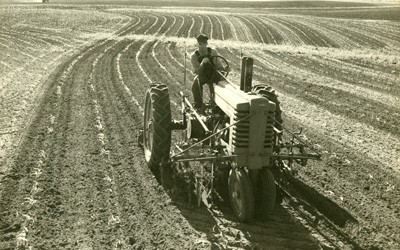 Adult male cultivating a field of very young corn, driving a tractor with cultivator implement.