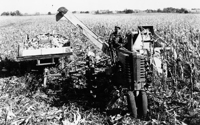 Two-row corn picker pulled along with and powered by a small tractor.  Harvested ears of corn collected in small wagon also pulled along with the tractor and cornpicker.