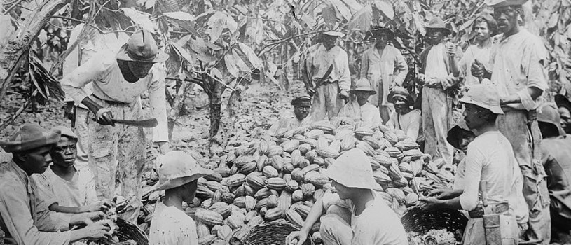 Trinidadians Sorting Cocoa Pods, 1900 (Image)