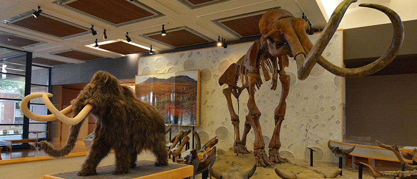Mammoth exhibit at the State Historical Building